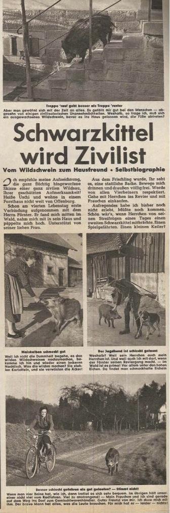 archivrubrik-pabst-ho-rzu-abb-2-724x1024