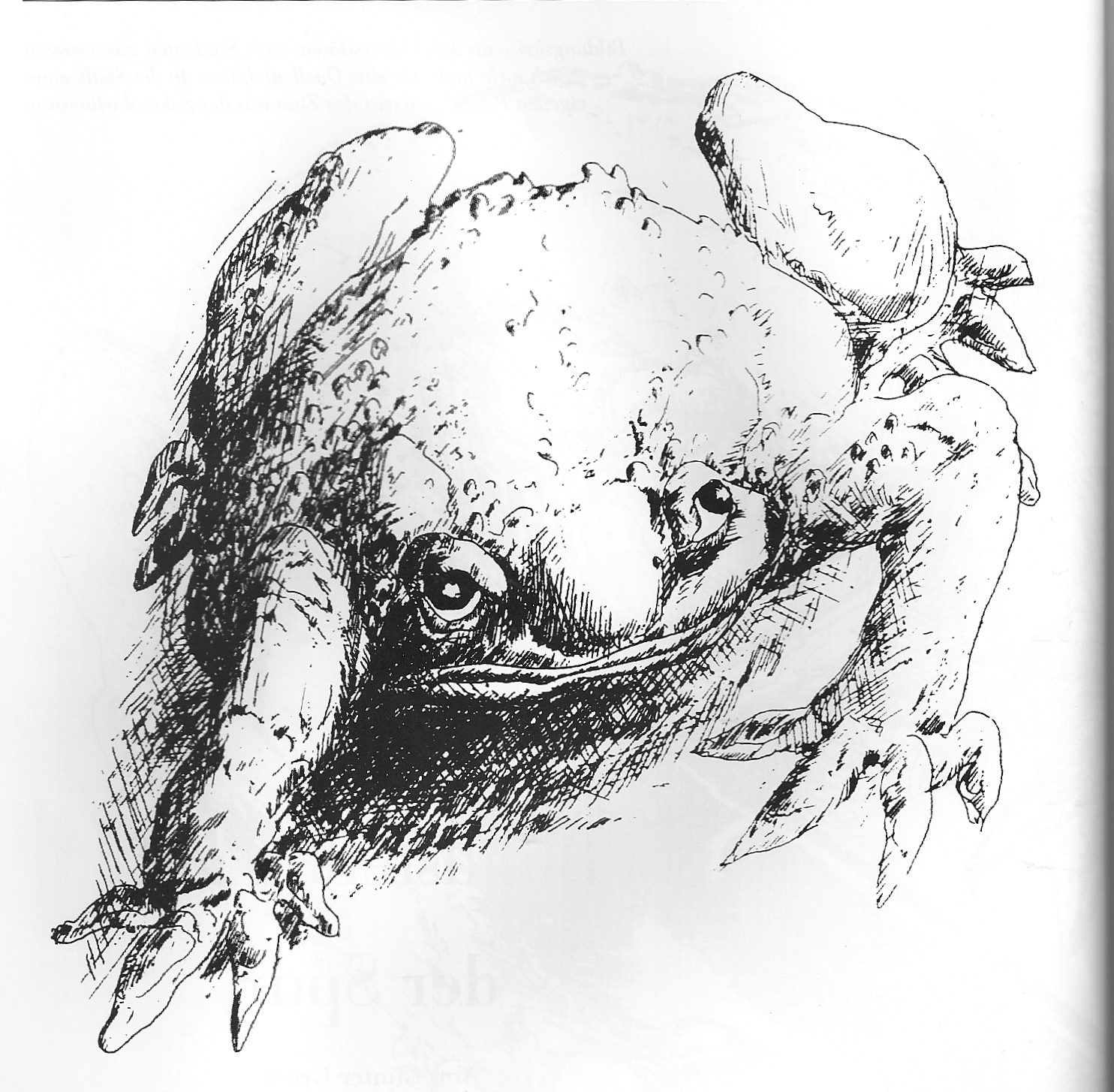 Kröte von Günter Grass in Essener Unikate 8, 1996