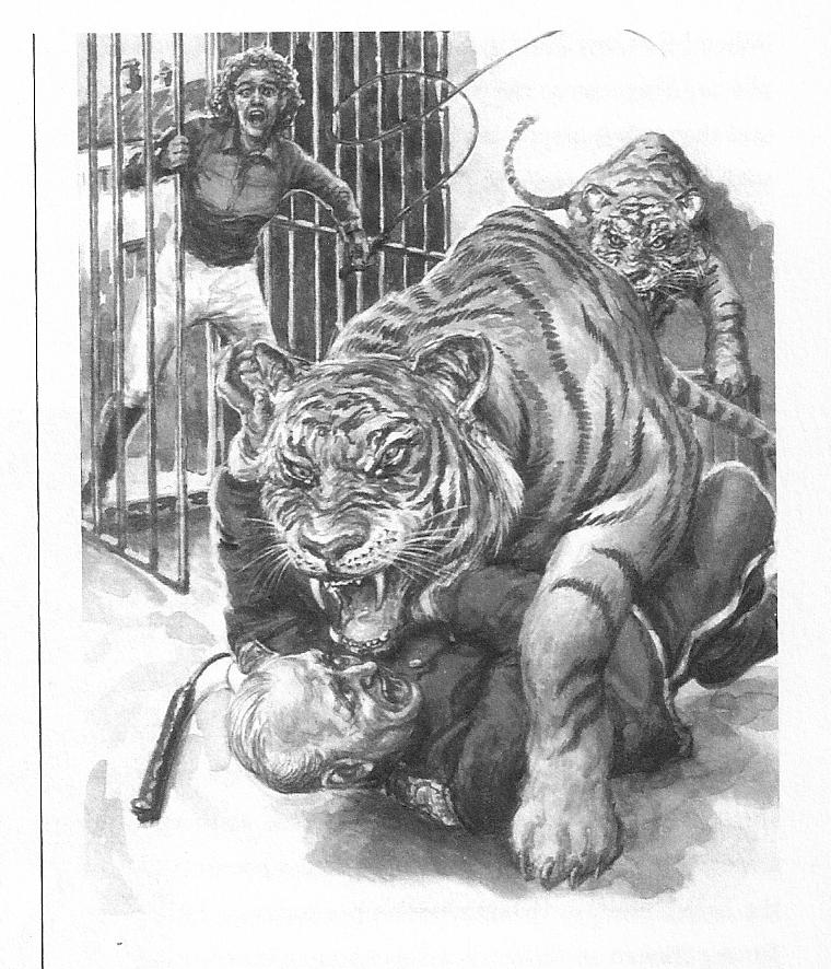 Tigerangriff Der Freund 8